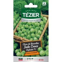 Tezier - Chou de Bruxelles Jade Cross HF1