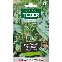 Tezier - Chou Fourrager Protéor INRA