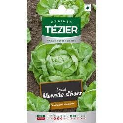 Tezier - Laitue d'Hiver Merveille d'hiver (G,B,)