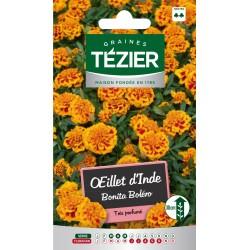 Tezier - Oeillet d'Inde Bonita Boléro -- Fleurs annuelles