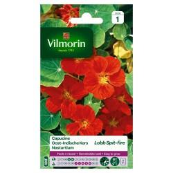 Vilmorin - Capucine Lobb Spitfire