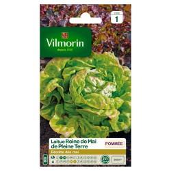Vilmorin - Laitue Reine de Mai de pleine terre