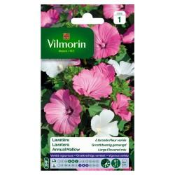 Vilmorin - Lavatere Grande Fleur Mix