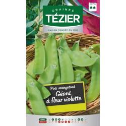 Tezier - Géant à fleur violette