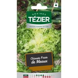 Tezier - Chicorée frisée de Meaux