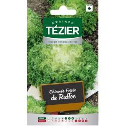 Tezier - Chicorée frisée de Ruffec