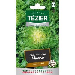 Tezier - Chicorée frisée Minerva