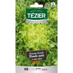 Tezier - Chicorée scarole ronde verte à cœur plein