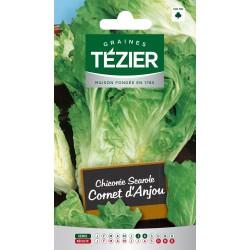 Tezier - Chicorée scarole Cornet d'Anjou