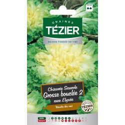 Tezier - Chicorée scarole Grosse bouclée 2 race Elysée
