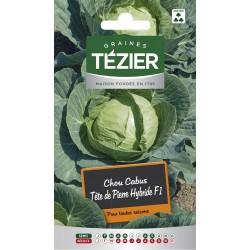 Tezier - Chou Cabus Tête de Pierre  HF1