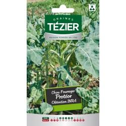 Tezier - Chou fourrager Protéor INRA Fort Grammage