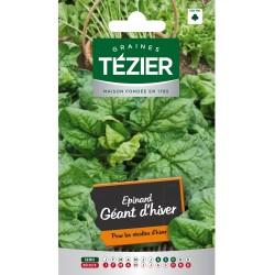 Tezier - Épinard géant d'Hiver