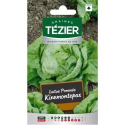 Tezier - Laitue Pommée Kinemontepas (G,N,)