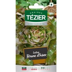 Tezier - Laitue d'Hiver Brune d'hiver (G,B,)