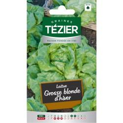 Tezier - Laitue d'Hiver Grosse blonde d'hiver (G,B,)