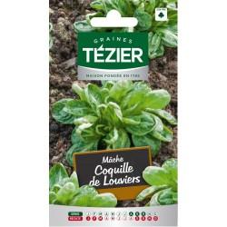 Tezier - Mâche Coquille de Louviers