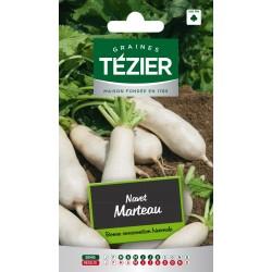 Tezier - Navet Marteau