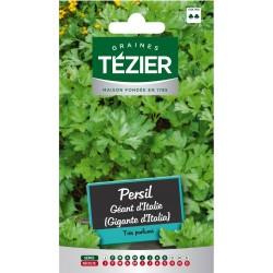 Tezier - Persil Géant d'Italie (Gigante d'Italia)