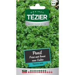 Tezier - Persil Frisé vert foncé race Calito