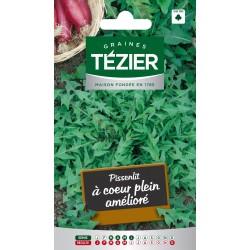 Tezier - Pissenlit à cœur plein amélioré