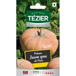 Tezier - Potiron jaune gros de Paris