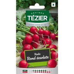 Tezier - Radis Rond écarlate