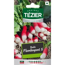 Tezier - Radis Flamboyant 5