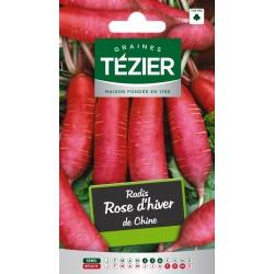 Tezier - Radis Rose d'hiver de Chine