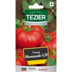 Tezier - Tomate Marmande V,R