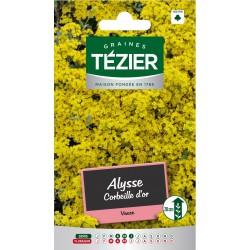 Tezier - Alysse Corbeille d'or -- Fleurs vivaces