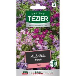 Tezier - Aubriétia variée -- Fleurs vivaces