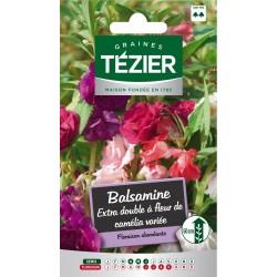 Tezier - Balsamine Extra double à fleur de camélia variée