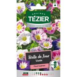 Tezier - Belle de Jour variée -- Fleurs annuelles