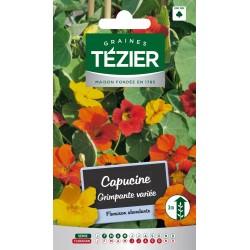 Tezier - Capucine grimpante variée -- Fleurs annuelles
