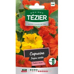 Tezier - Capucine naine double Joyau -- Fleurs annuelles