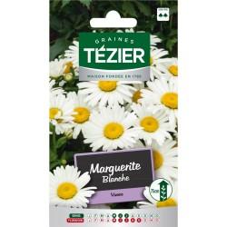Tezier - Marguerite blanche -- Fleurs vivaces