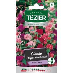 Tezier - Clarkia Elégant double varié -- Fleurs annuelles
