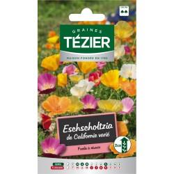 Tezier - Eschscholtzia de Californie variée -- Fleurs annuelles