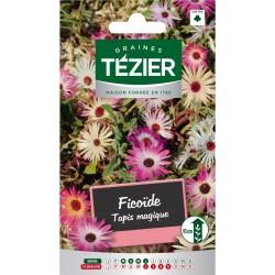 Tezier - Ficoïde Tapis magique -- Fleurs vivaces