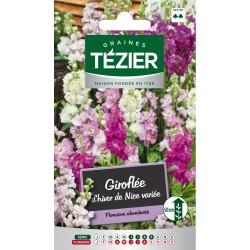 Tezier - Giroflée d'hiver de Nice variée -- Fleurs annuelles