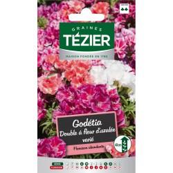 Tezier - Godétia double à fleur d'azalée varié
