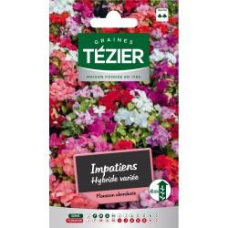 Tezier - Impatiens hybride variée -- Fleurs annuelles