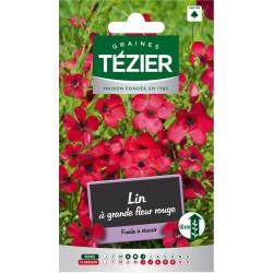 Tezier - Lin à grande fleur rouge -- Fleurs annuelles