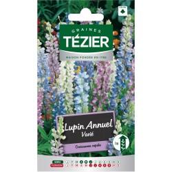 Tezier - Lupin annuel varié -- Fleurs annuelles
