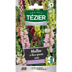 Tezier - Muflier à fleur géante varié -- Fleurs annuelles