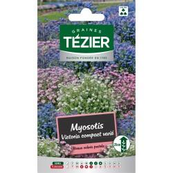 Tezier - Myosotis Victoria compact varié -- Fleurs bisannuelles