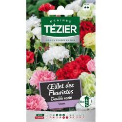 Tezier - Oeillet des Fleuristes double varié -- Fleurs vivaces
