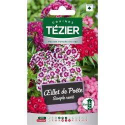 Tezier - Oeillet de poète simple varié -- Fleurs bisannuelles