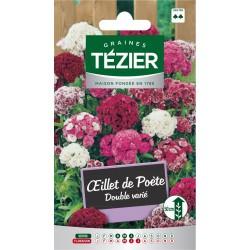 Tezier - Oeillet de poète double varié -- Fleurs bisannuelles